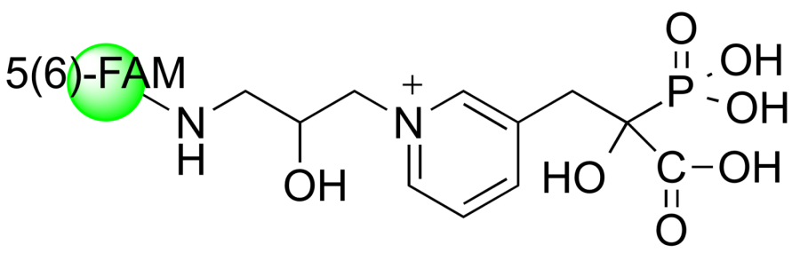 5(6)-FAM-RISPC 1