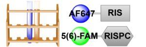 Two-Probe Bone Affinity Sampler